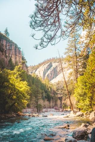 Yosemite Canyon - tree canyon