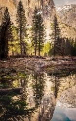 Water Reflection, Yosemite